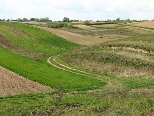 Zdjęcie ukazuje pofalowany krajobraz zielonych lub zabronowanych pól wczesną wiosną. Z lewej wybiega i i wijąc się znika za pagórkiem polna droga. Słoneczna pogoda, lekkie zachmurzenie.