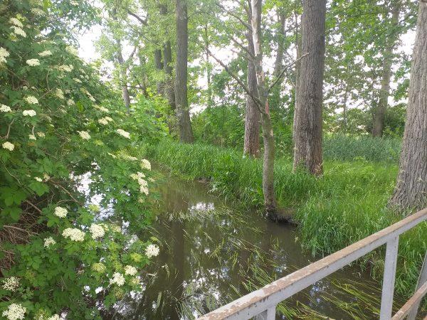 Na pierwszym planie zdjęcia widać po prawej metalową poręcz mostku a po lewej fragment kwitnącego krzaku bzu czarnego. Po środku widać powierzchnię rzeki z źdźbłami wodnych roślin na powierzchni, a nad nią nadbrzeżne trawy i pnie drzew ocieniających mostek.